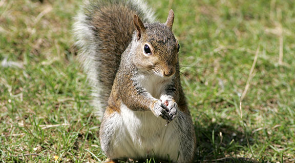 squirrels - Pictures Of Squirrels
