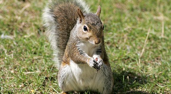 helping wildlife squirrels ohio wildlife center